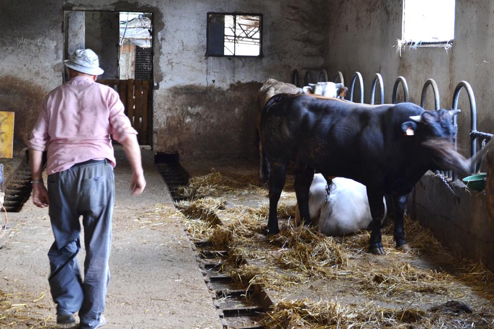 Fattoria for Foto di fattoria moderna